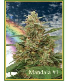 Mandala n.1