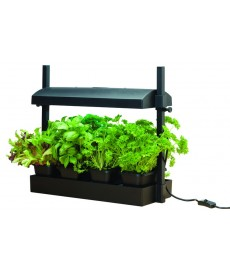 Micro Grow Light
