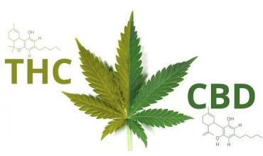 Diferencias entre CBD y THC